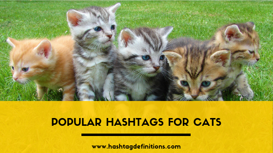 Popular Hashtags for Cats - Hashtag Definitions