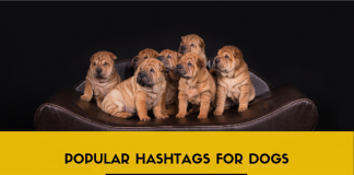 Popular Hashtags for Dogs - Hashtag Definitions